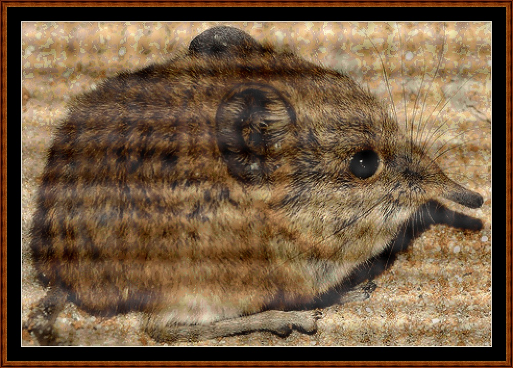 Mini Creatures - Elephant Shrew Cross Stitch