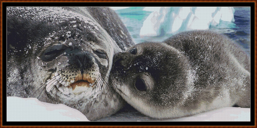 Seal Kisses