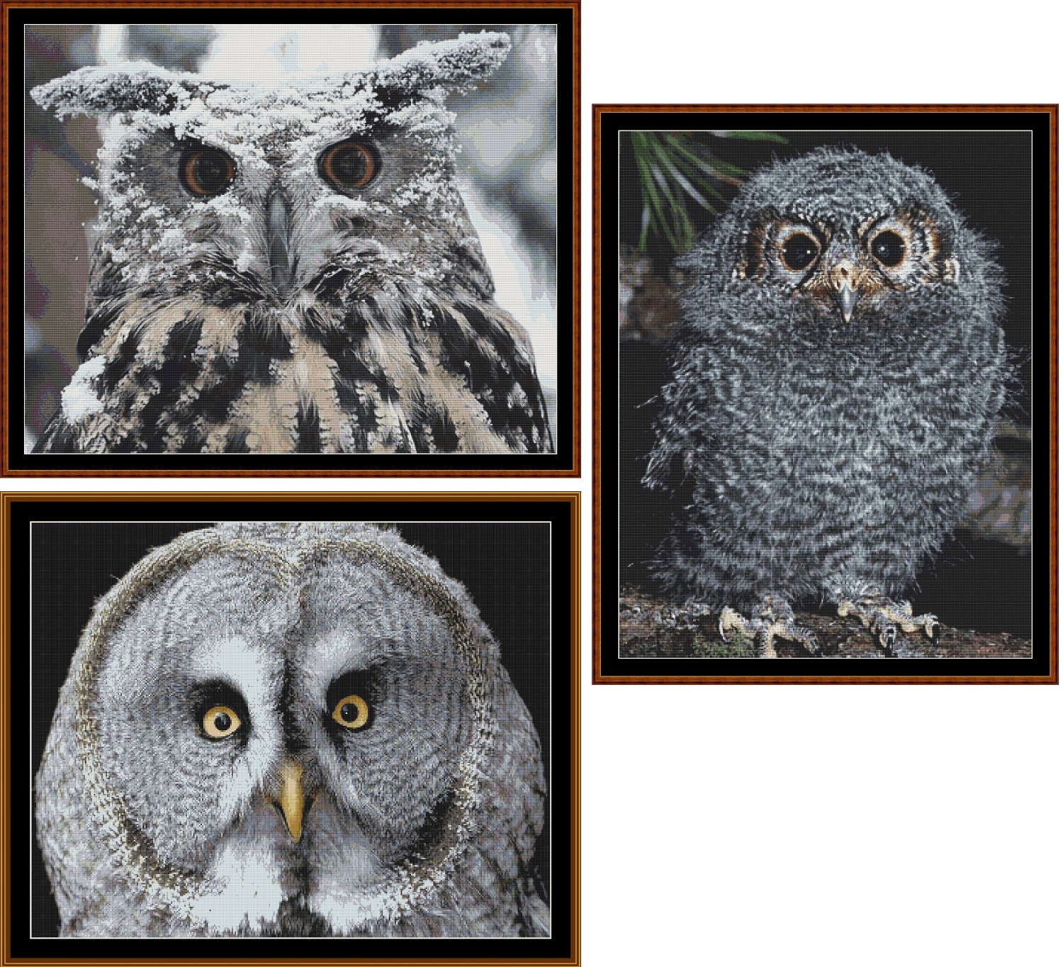 3 Wise Owls Cross Stitch pack - 3 charts