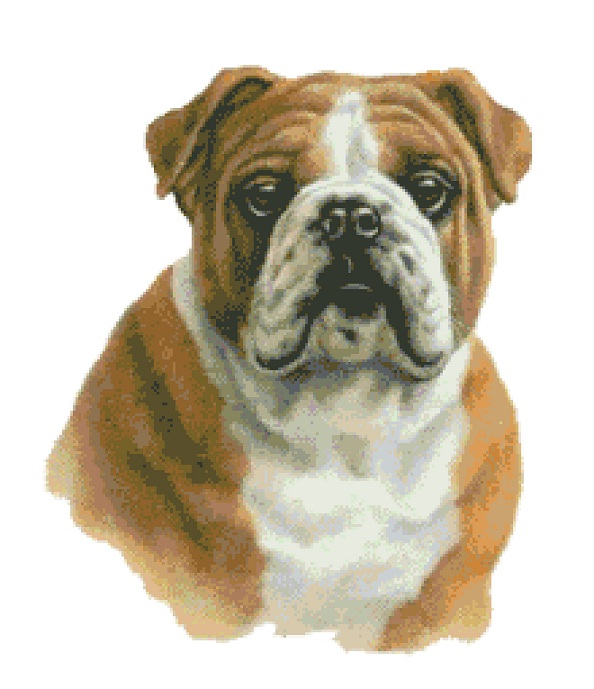 Bulldog Cross Stitch