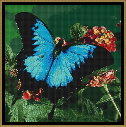 The Blue Butterfly Cross Stitch